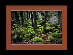 Shining Through Framed Print By Marnie Patchett