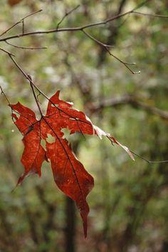 Bosco autunno-2
