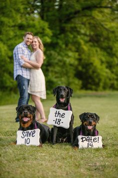 Dog save the date engagement photos! Hobby Lobby signs painted with acrylic paint and hung around my dogs' necks with purple ribbon :)