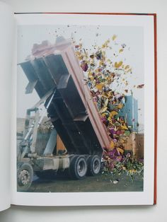 Photographs by Stephen Gill, Hackney Flowers