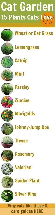15 cat-safe garden plants                                                                                                                                                                                 More