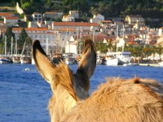 -)) View on the city of Hvar from a special perspective. All Over The World, Cannes, Venice, Perspective, Film, Animals, Beautiful Places, Nice Asses, Movie