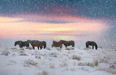 ***Snow on the Range (Wyoming) by Brad Cheese / 500px