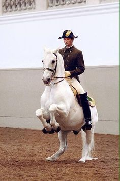 Lippizaner stallion of the Spanish Riding School in Vienna performs the levade. Ballet in the Saddle - Ralph Lauren Magazine All The Pretty Horses, Beautiful Horses, Animals Beautiful, Lippizaner, Lipizzan, Spanish Riding School, Horse Ears, Andalusian Horse, Majestic Horse