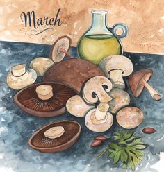 March mushroom illustration for Kimberton Whole Food's marketing materials. Watercolor and ink by Cynthia Oswald. Portobello, Parsley, White Button, Shiitake, Baby bella