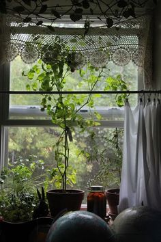 lace in windows, plants on window sill Big Garden, Home And Garden, Cottage Shabby Chic, Cottage Windows, Sweet Home, Window View, Lace Window, Open Window, Through The Window