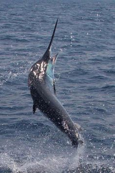 blue #marlin contest #marlinmag