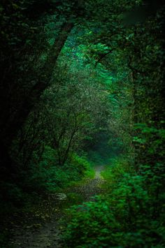 The green path by Michele Fornaciari on 500px.com (Original Size - Height: 4288px - Width: 2848px)