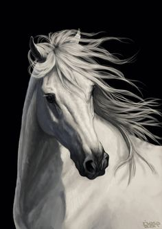 Another white horse on black! How creative of me >.< Loosely referenced from a photo by Bob Langrish. Photoshop and wacom tablet. Pretty Horses, Horse Love, Beautiful Horses, Horse Drawings, Animal Drawings, Art Drawings, Painted Horses, Cute Animal Tattoos, Horse Artwork