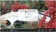 Charleston -> Magnolia Plantation & Gardens
