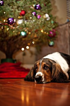 http://dogpictures.me - Christmas and Your Dog