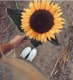 Sunflower and converse