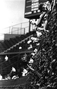 wrigley field bleachers in the 1950's