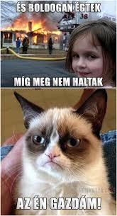 Funny grumpy cat memes, grumpy cat humor и grumpy cat meme. Grumpy Cat Quotes, Funny Grumpy Cat Memes, Cat Jokes, Funny Animal Jokes, Cute Funny Animals, Funny Cute, Animal Humor, Funny Minion, Cats Humor