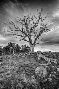Dead tree by John Hunt on 500px