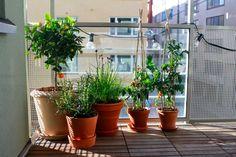 Erika kan berika: Titta! Vår balkong!