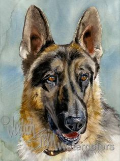 Brains and Brawn is an Open Edition Giclee Art Print from a watercolor featuring a German Shepherd Dog. Informally referred to as a GSD, the German