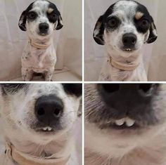 """This Online Community """"Toofers"""" Shares Pictures of Adorable Dog Teeth Funny Animal Memes, Dog Memes, Funny Animal Pictures, Cute Funny Animals, Cute Pictures, Fuuny Memes, True Memes, Hilarious Memes, Memes Humor"""
