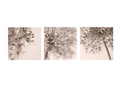 Three Abstract  Flower Photographs   Monochromatice by JudyStalus, $33.00