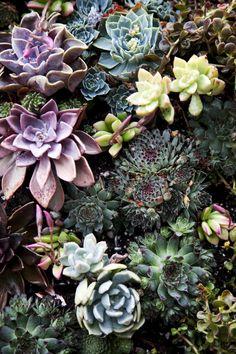 Succulents detail from Living Wall Types Of Succulents, Cacti And Succulents, Planting Succulents, Planting Flowers, Air Plants, Garden Plants, Indoor Plants, Sempervivum, Echeveria