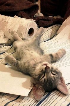 Kitten is Exhausted After a Hard Day's Work..