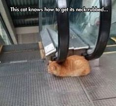 This Cat Has Its Life All Figured Out