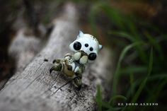 Polyphagocinus albus. / Garden white spidercrab. by dodoalbino.deviantart.com on @DeviantArt