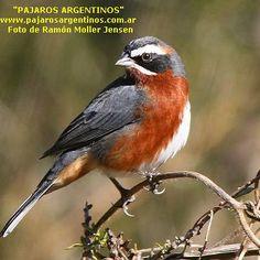 Marta R. Zabaleta: Pájaros argentinos IV