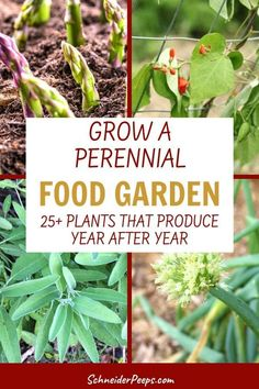 There are many edible perennials for the food garden. Learn how to grow perennial vegetables, fruits, and herbs to feed your family year after year. There are perennial edible plants that will grow in almost every gardening zone! Planting Vegetables, Plants, Perennial Plants, Food Garden, Perennial Herbs, Perennial Vegetables, Perennial Garden, Edible Plants, Planting Herbs