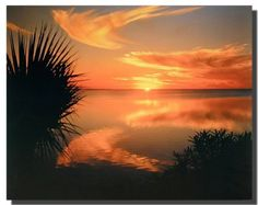 Perfect! This ocean beach sunset scenery poster will calm you every moment you look at it. It depicts a sense of beautiful beach, wonderful sunset and green trees. This Ocean beach sunset Laguna Madre Texas scenery nature art print poster is a perfect gift for nature lover. Get up and buy this wonderful wall poster for its high quality and wonderful color accuracy.