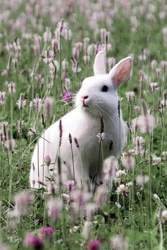 Bunny in spring (1) From: The Beldam, please visit