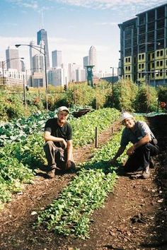 America's Top 10 Urban Farms: Organic Food Farming, Community-Supported Agriculture, Farmers Markets