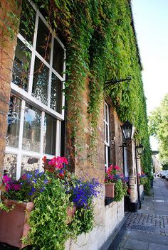 Gorgeous greenery and flower boxes - Woodstock. Oxfordshire