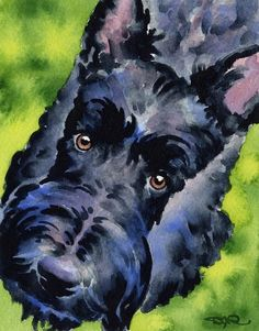 SCOTTISH TERRIER Dog Art Print Signed by Artist DJ Rogers