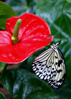 Dubai Butterfly Garden from www.veryhungryexplorer.com