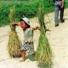 Child labour Laos