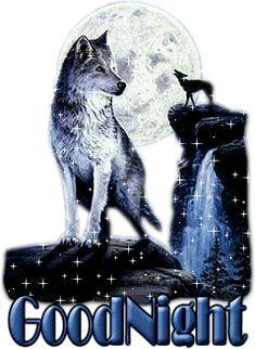 """Loups à la lueur de la pleine lune """"Good night""""..."""