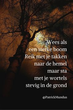 Be as a big strong tree. Reach your branches to heaven but stand firmly with your roots in the ground. Dutch Quotes, English Quotes, Mantra, Yoga Words, Dream It Do It, Wise People, Leader In Me, Just Be You, Beautiful Words
