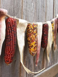 Corn Husk Garland - Use eye hook to hang cobs and loop corn husk on a piece of twine. Makes a wonderful Fall Thanksgiving Garland.