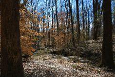 Hiking with Kids: Birchmore Trail – Athens, Georgia