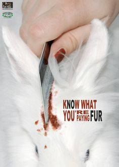 The Evil Fur Trade - Animal Rights Zone Small Animal Rescue, Animal Slaughter, Stop Animal Cruelty, Animal Testing, Animal Graphic, Fur Trade, Why Vegan, Vegan Animals, Save Animals