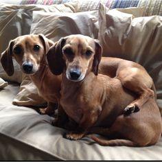 Speck & Snapp... Sisters... Terrors... Cuddle buddies!