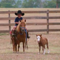 little guy on a little horse...next to an even smaller horse! :)