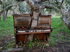 The Old Piano Tree by Crackoala.deviantart.com on @deviantART