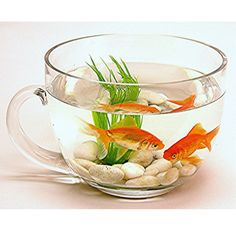 Teacup Glass Fish Bowl - Christmas for The Bug?