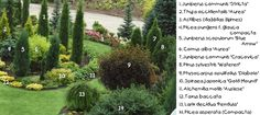 1. Juniperus communis 'Stricta' 2. Thuja occidentalis 'Aurea' 3. Astilbes (dažādas šķirnes) 4. Picea pungens f. glauca (Compacta) 5. Juniper...