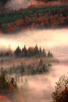 Autumn Mist - Sunshine Coast, British Columbia, Canada