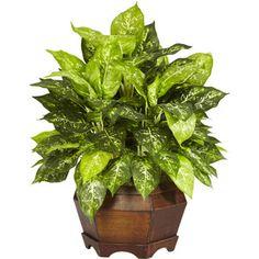 Nearly Natural Variegated Dieffenbachia w/Large Hexagon Silk Plant