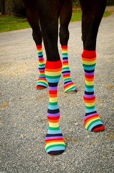 Horse socks... more for Western riders.. not for an English riding event..