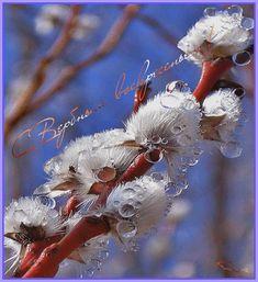 ♥ , from Iryna Ukrainian Easter Eggs, Macro Photography, Wallpaper Quotes, Bird, Christmas Ornaments, Holiday Decor, Nature, Animals, Bokeh